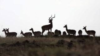 historia,mundo,ambiente,africa,conservacao-natureza,biodiversidade,