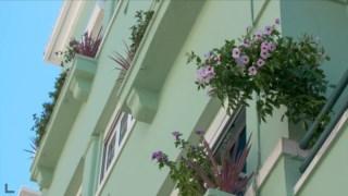 vicios,p3,botanica,sustentabilidade,jardinagem,lisboa,