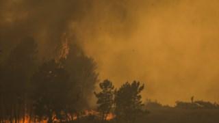 incendios,mondim-basto,proteccao-civil,bombeiros,local,incendios-florestais,