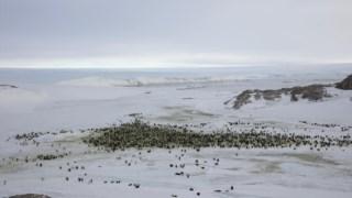 terra,ambiente,clima,antarctida,alteracoes-climaticas,biologia,