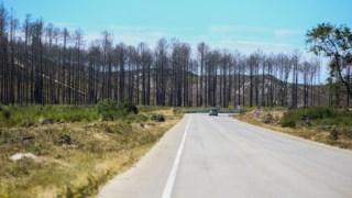 icnf,incendios,leiria,local,ambiente,florestas,