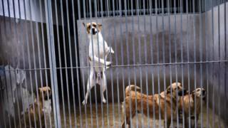animal,animais,direitos-animais,noticias,sociedade,lisboa,