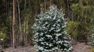 sustentabilidade,eucaliptos,sociedade,ambiente,rede-natura-2000,florestas,