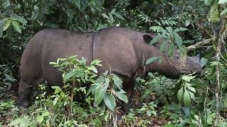 ambiente,malasia,indonesia,asia,conservacao-natureza,biodiversidade,