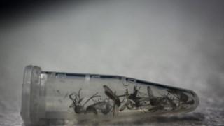 zika,dengue,saude,ciencia,virus,doencas,