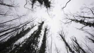 negocios-florestais,floresta,capoulas-santos,ministerio-agricultura,sociedade,florestas,
