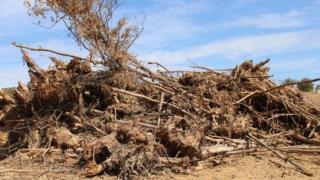recursos-naturais,mertola,local,alentejo,ambiente,florestas,