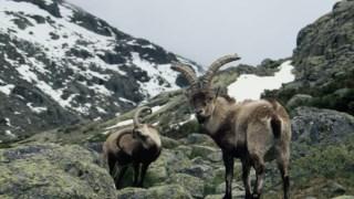 animais,ciencia,portugal,conservacao-natureza,biodiversidade,biologia,