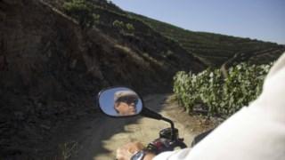 vinhos-portugal-brasil,vinhos-portugal-rio,vinicultura,vinhos,fugas,brasil,