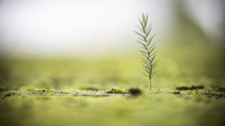 sustentabilidade,arvores,icnf,amarante,sociedade,florestas,