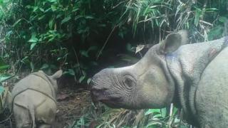 animais,ambiente,indonesia,asia,conservacao-natureza,biodiversidade,