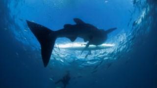 china,asia,pescas,conservacao-natureza,biodiversidade,oceanos,