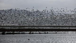 aves,aeroporto-lisboa,tejo,comissao-europeia,sociedade,ambiente,