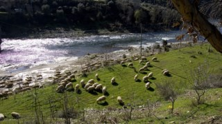 pecuaria,mogadouro,local,agricultura,ambiente,