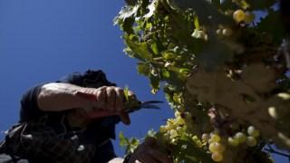 vinhos,vinhos-cronica,douro,fugas,opiniao,alentejo,