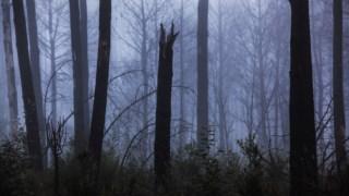 floresta,ministerio-ambiente,politica,ambiente,incendios-florestais,florestas,