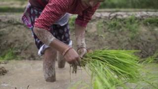 agricultura,uniao-europeia,ambiente,fome,onu,desenvolvimento-sustentavel,
