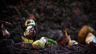 cogumelos,fundao,alimentacao,gastronomia,fugas,agricultura,
