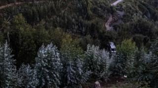floresta-apoiado,gestao-florestal,floresta,sociedade,ordenamento-territorio,florestas,