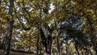 goncalo-ribeiro-telles,ciencia,serralves,ambiente,florestas,biodiversidade,