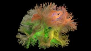neurociencia,estudo,saude,ciencia,investigacao-cientifica,cerebro,