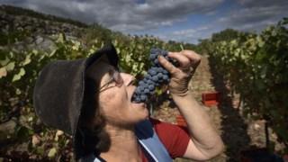 cultura,vinicultura,fotografia,viseu,vinho,fugas,