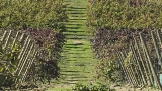 vinicultura,bairrada,vinhos-tintos,especial-vinhos,vinhos,fugas,