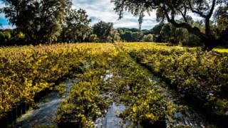especial-vinhos-inverno-2020,castas,vinicultura,especial-vinhos,vinhos,fugas,
