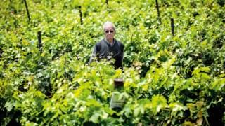 palmela,especial-vinhos,vinhos,fugas,opiniao,agricultura,