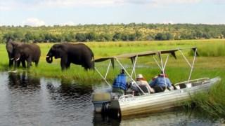População de elefantes na Namíbia cresceu depois do sucesso de um programa de protecção