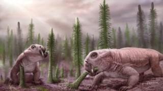 ciencia,mocambique,paleontologia-,geologia,dinossauros,biologia,