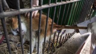 animais,direitos-animais,eua,primatas,nasa,espaco,