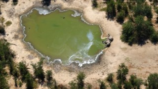 zimbabwe,namibia,botswana,africa,conservacao-natureza,alteracoes-climaticas,
