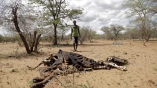 agricultura,fome,zimbabwe,africa,nacoes-unidas,onu,