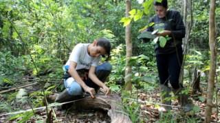 america-sul,ambiente,brasil,florestas,amazonia,alteracoes-climaticas,