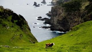 portugal,madeira,acores,algarve,alentejo,turismo,