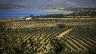 local,agricultura,alentejo,uniao-europeia,ambiente,agua,