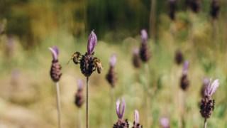 abelhas,animais,ciencia,brasil,