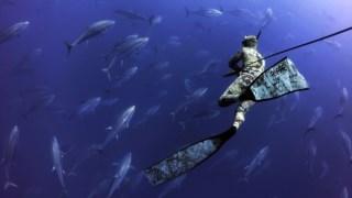 mergulho,fugas,acores,pescas,biodiversidade,oceanos,