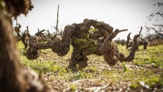 especial-vinhos,vinhos,douro,fugas,agricultura,alentejo,