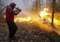 Ontem, o SNBPC registou 252 incêndios