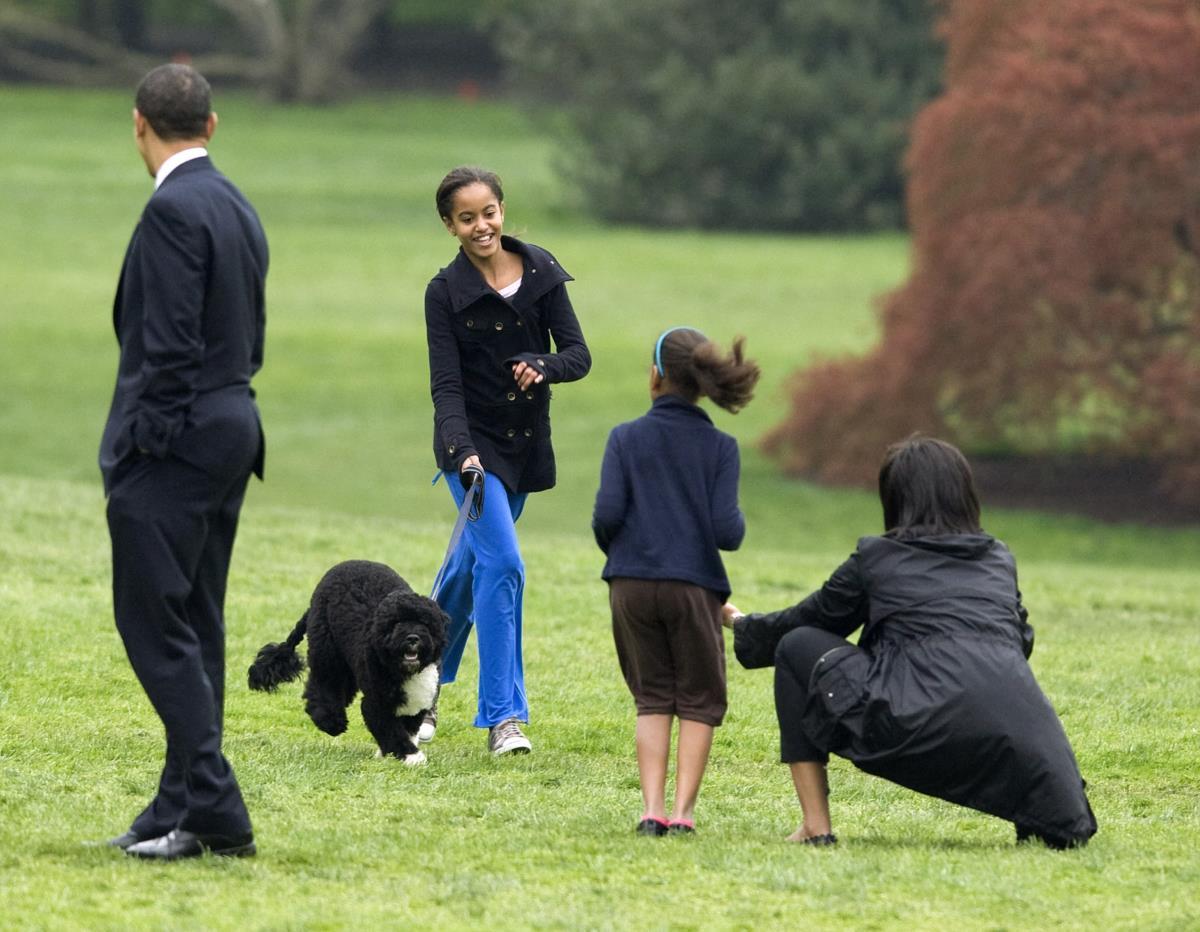 """Em 2009 chega """"Bo"""", o cão de água português oferecido pelo senador do Massachusetts, Edward Kennedy"""