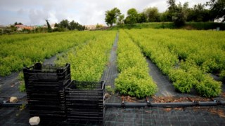 """""""Estamos ansiosos pela visita da ministra Assunção Cristas, para validar este tipo de agricultura e para incentivar a produção biológica de plantas aromáticas"""", atira Luís Alves, que convidou mesmo ?a governante"""